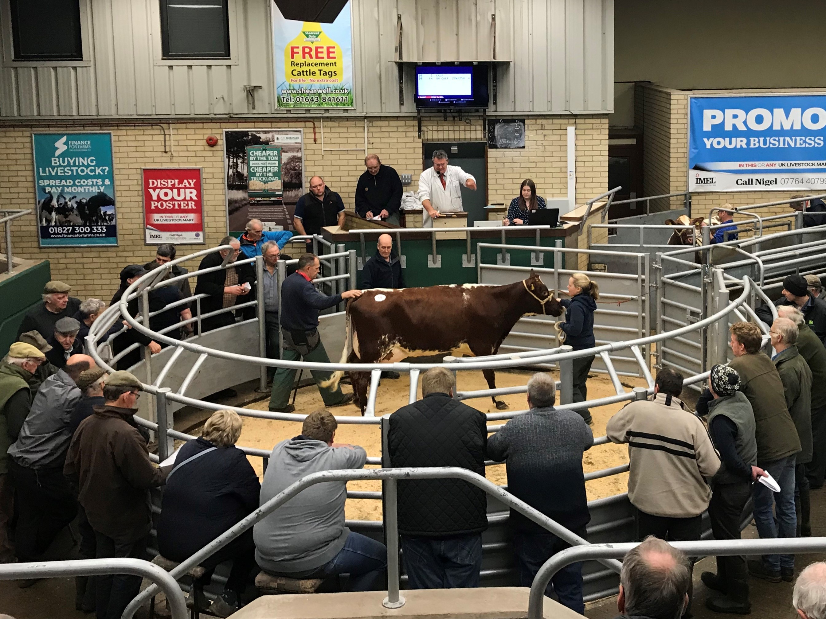 Dairy Shorthorn Sale 121118